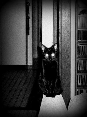 Halloween Cat - Liz Bennefeld photo