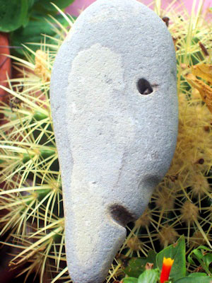 stone face in cactus - katha bella wilson photo