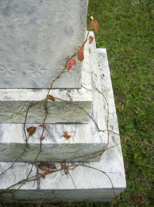 Graveyard Vine - Sara Tantinger photo